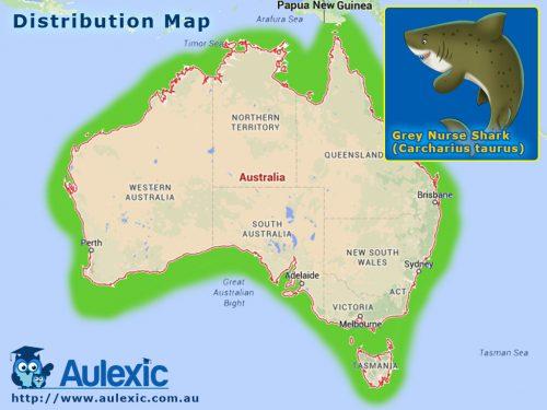 Grey Nurse Sharks - Distribution Map