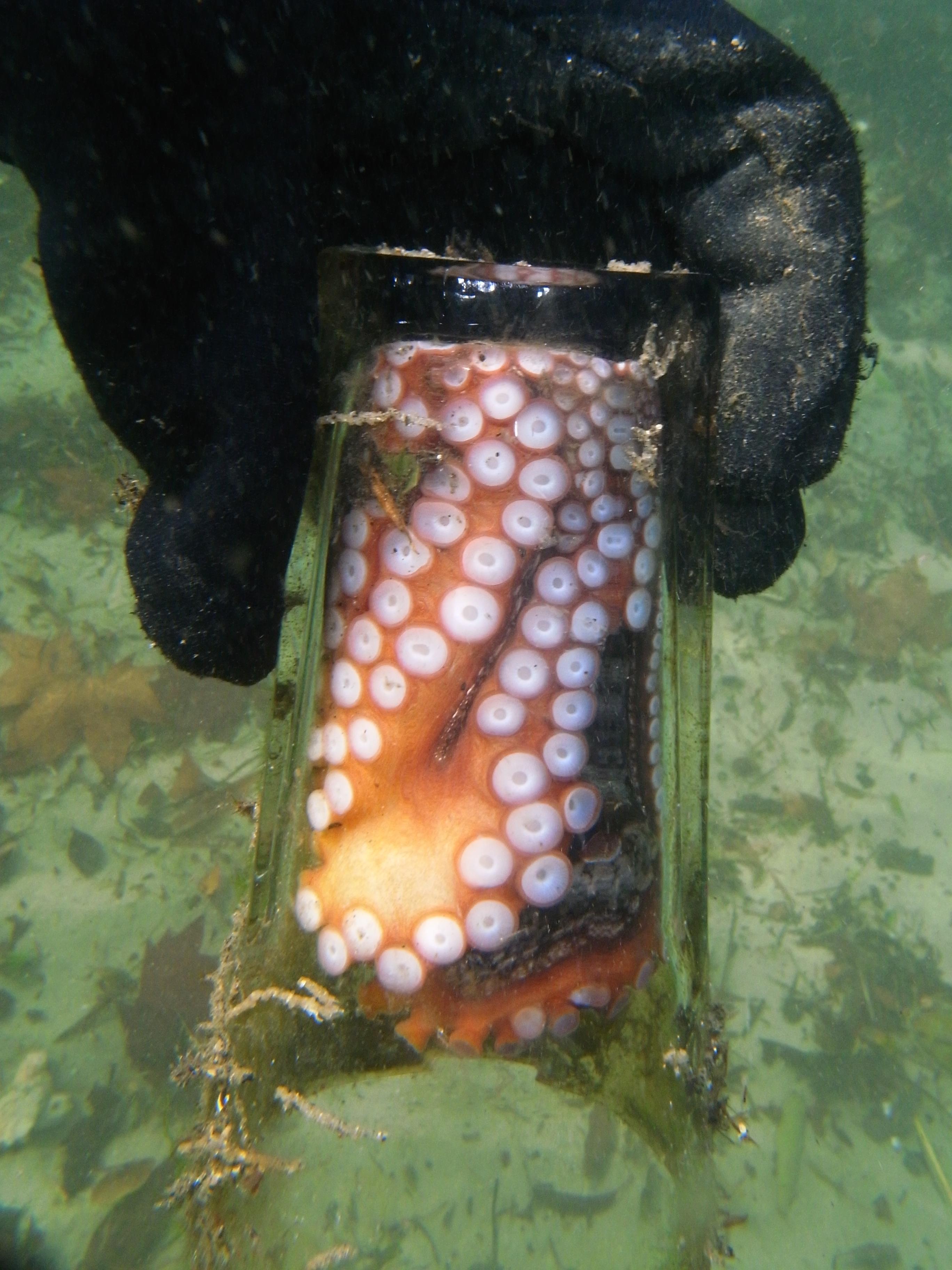 Gloomy Octopus by Sylke Rohrlach