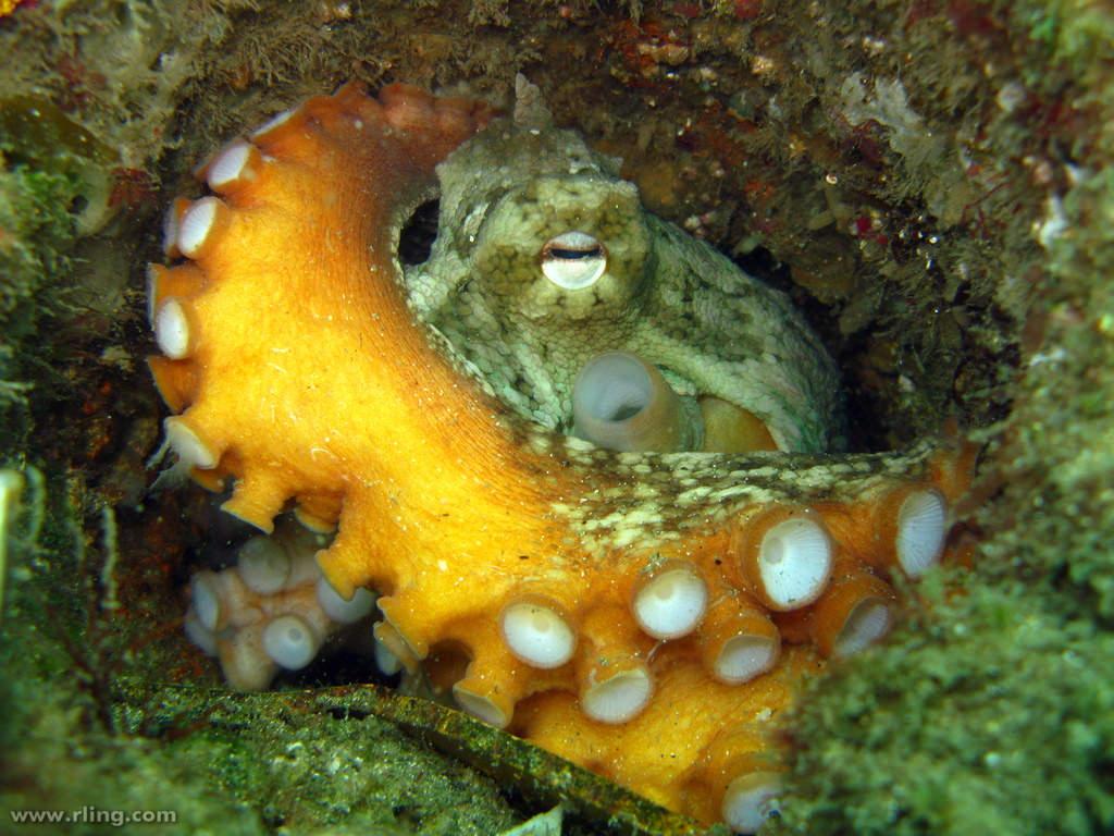 The Gloomy Octopus – Let's Learn